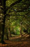 Beverley Westwood IMG_7815.jpg