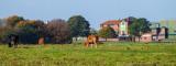 Beverley Westwood IMG_7785.jpg