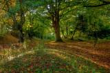 Beverley Westwood IMG_7809.jpg
