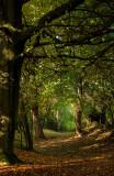 Beverley Westwood IMG_7814.jpg