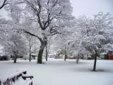 Cottingham IMGP0095_2.jpg
