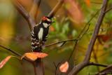Tuscarora Scenes & Wildlife - 2014