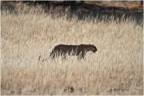 Leopard 7383