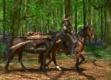 Ashridge estate bluebell woods with Braveheart
