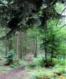 A favourite footpath