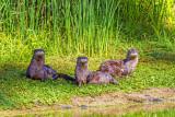 4 legged visitors