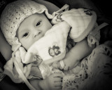 Babies are such a nice way to start people. ~ Don Herrold