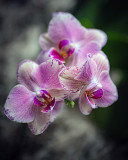 Flowers seem intended for the solace of ordinary humanity. ~ John Ruskin
