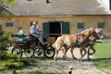 Horses Donkeys