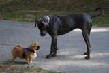 Dogs Hunde