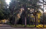 O Parque D. Carlos em 7 de dezembro de 2013