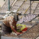 O Estindarte de Secagem de Pescado