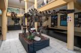 Fósseis de Dinossauros com 150 Milhões de Anos (Jurássico Superior)
