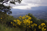 Overlook and Spring Flowers
