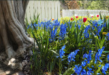 Williamsburg Garden 2 (Spinner)