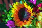 Sunflower Catching Sunshine