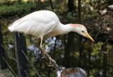 Brookgreen Gardens Bird 2