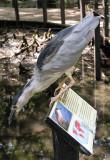 Brookgreen Gardens Bird 1