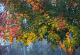 Fall in Pennsylvania 2015
