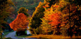 New York State Images Gallery