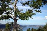 View from Mt. Floyen, Bergen, Norway.