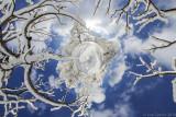 _JC74781_Ice_Forest_LP_ipfh-2.jpg