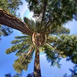 _JC77894_5_6_Sequoias_little_planet_01.5.jpg