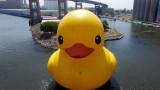 20160826_Mama_Duck_web-0670.jpg