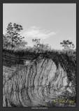 Roots  Earth-1.jpg