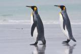 King Penguin pair by water.jpg