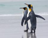 King Penguin pair 2.jpg