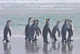 King Penguins watching the sea.jpg