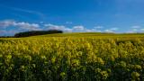 Howardian Hills