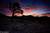 Joshua Tree_Death Valley