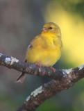 Birds of the Pocono Mountains & Environs, PA, 2013