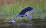 Birds of the Catskill Mountains, NY, 2013