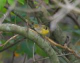 Land Birds, Various
