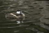 Duck1213.jpg