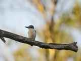 kingfisher_nest_