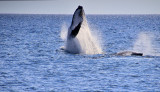 Whale watching with tasman venture staying at the Mantra