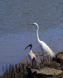 all_photos_of_birds_2016