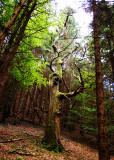 Djouce Wood