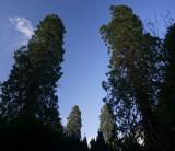 4 redwoods.jpg