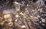firewoodses3.jpg