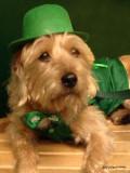Finn the Irish Leprechaun