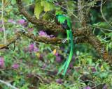 Birds of Costa Rica -- 2014