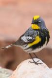 Birds of Los Alamos