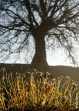 Roots & Branches / Raices y ramas