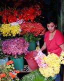 Baguio blooms