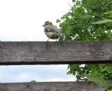 Bird's / Fugle / Vogel Gallery
